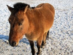 horse-on-snow-1412948-m